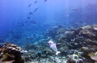 Ρομποτικό ψάρι μπορεί να κολυμπήσει αυτόνομα μέσα στους ωκεανούς