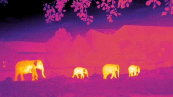 Λογισμικό αστροφυσικής βοηθά στην προστασία ειδών υπό εξαφάνιση