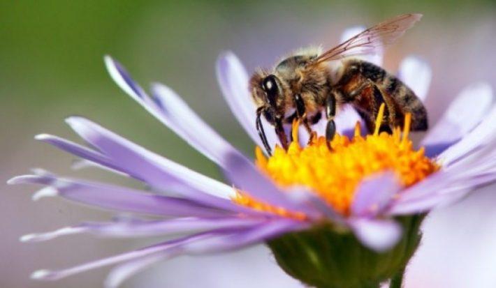Πόσο καλές είναι οι μέλισσες στα μαθηματικά;